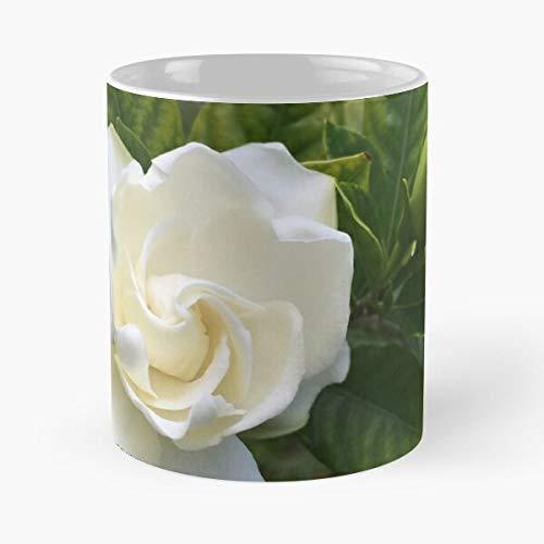 Rose Escobar Pete Feel Cincy Like I Cincinnati Pablo NATI Die Beste 11 Unzen weiße Marmor Keramik Kaffeetasse