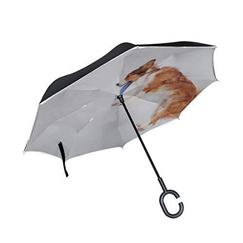Paraguas Plegable de Doble Capa a Prueba de Viento Dos Labrador Retrievers...