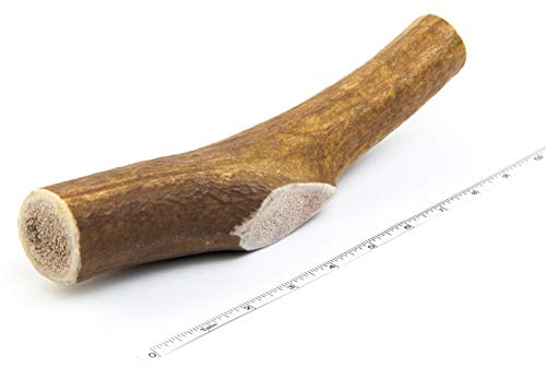Devil Dog Pet Co Antler Dog Chew - Premium Elk Antlers for Dogs - Long Lasting Dog Bones for Aggressive Chewers - No Mess No Odor - Wild Shed in The USA - Veteran Owned (Jumbo)
