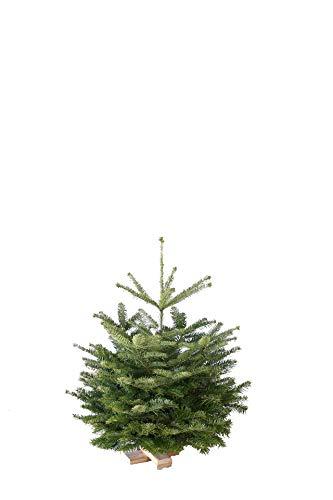Gutshof Tanne - Echter Weihnachtsbaum Nordmann, grün, 60 x 60 x 95 cm, 146