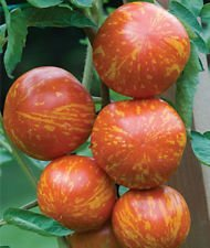 vegherb Red Zebra Tomaten-Samen! Mehr als 200 Arten von Tomaten In unserem Speicher! Comb S/H