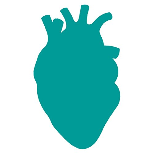 Anatomical Heart Silhouette Cardiologist Logo - Vinyl Decal for Outdoor Use on Cars, ATV, Boats, Windows and More - Turquoise 11 inch