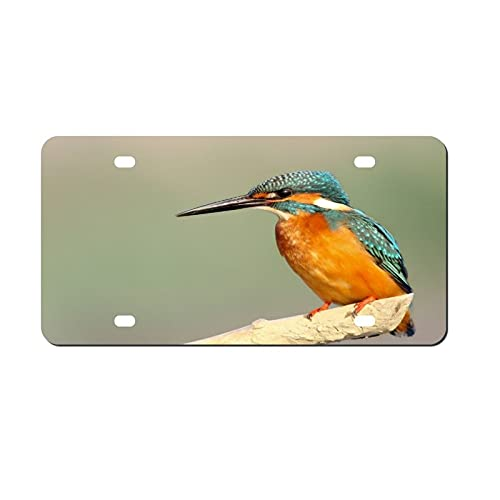 Beak Wildlife Green Heron License Plate Aluminum Metal License Plate Car Tag Novelty Home Decoration for Women Girls Men Boys 6 inch X 12 inch