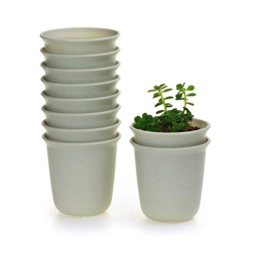 T4U 3 Inch Plastic Round Plant Pot/Cactus Flower Pot/Container Grey Set of 10,Seeding Nursery Planter Pot with Drainage for Flowers Herbs African Violets Succulents Orchid Cactus Indoor Outdoor