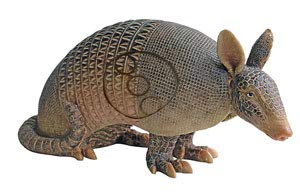 Real Wild 3D Armadillo Archery Target