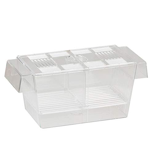Siebwinn Transparente Acryl Aquarium Zucht Isolation Teiler Brutkasten Aquarium Brut Inkubator Halter mit Saugnäpfen 12 x 7 x 7cm