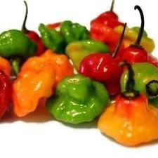 Ajicito, Aji Dulce, Aji Gustoso, Cachucha, Puerto Rico pimiento dulce de 40 semillas