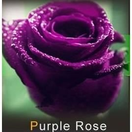 les colis noirs lcn 20 graines de rose rosiers couleur violet