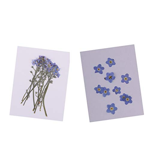 P Prettyia - Fogli di fiori secchi, non ti scordar di me, confezione da 20