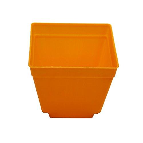 Adhere To Fly Lot de 10 pots de fleurs carrés en plastique pour intérieur Orange 10 cm