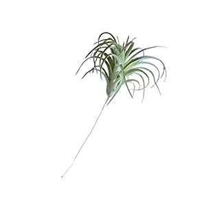 Artificial Bromeliad, Fake Bromeliads Simulation Fake Flower Small Micro Landscape Plants for Wall Home Garden Decoration