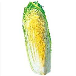 茨城産など 白菜(1/4切)1パック