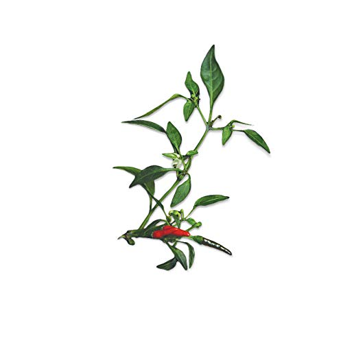 Capsules De Graines pour herbes Plantui Smart Garden, Chili Demon Red 3x