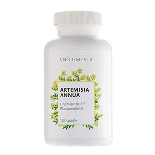 ANNUMISIA® Artemisia Annua Extrakt 30:1 hochdosiert - 120 Kapseln - Einjähriger Beifuß mit 450 mg Extrakt pro Kapsel - deutsche Markenqualität