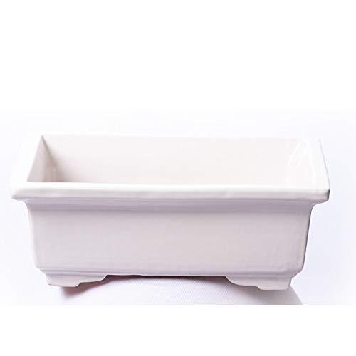 Alfareros Damian Canovas Maceta para Bonsai DE Barro Y ESMATADA EN Color Blanco. Medidas 22X16X8 CM.Modelo Tokio. con TU Compra TE REGALAMOS EL Plato.