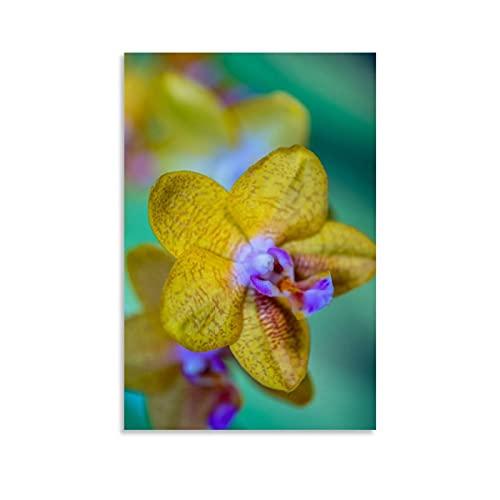 beizi Phaleanopsis Poster, dekoratives...