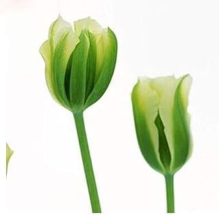 Comprar bulbos de tulipanes azules online