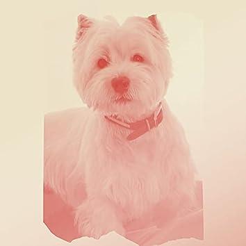 Levendig (Lopende Honden)