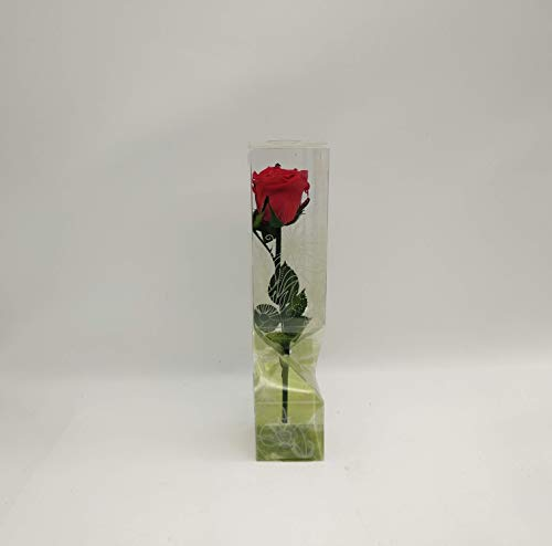 Floréate Rosa roja eterna preservada