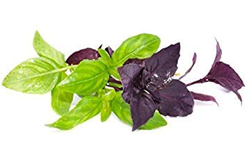 Potseed Basil, Rouge Dark Opal - Min. 30 graines