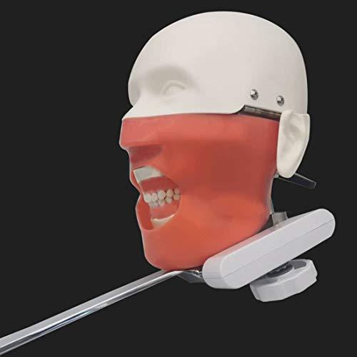 Modelo De Cabeza Simulador Dental Maniquí Fantasma con Soporte De Banco Modelos Dentales, Se Puede Practicar El Sillón Dental