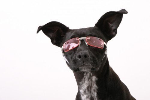 Doggles X-Small K9 Optix Sunglasses for Dogs, Silver Frame, Smoke Lens
