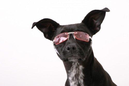Doggles Medium K9 Optix Sunglasses for Dogs, Silver Frame, Smoke Lens