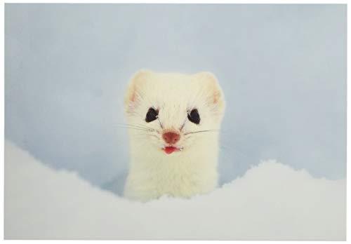 ピンナップ ポストカード 10+1枚 FK10 オコジョ 写真 福田幸広