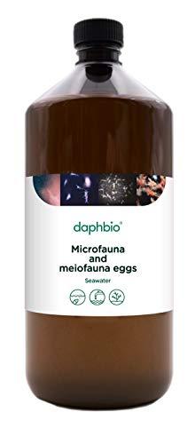 Daphbio Microfaune meiofaune Vivante - 1 Litre