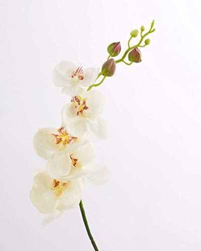 artplants.de Rametto d'orchidea phalaenopsis Artificiale, Naturale al Tatto, Bianco-Crema, 90cm - Orchidea Finta/Fiore Tessile