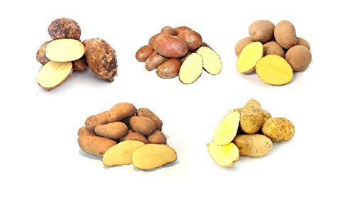 Frische Kartoffeln Kartoffelmix Probierpaket verschiedene Kartoffelsorten mehlig, vorwiegend festkochend, festkochend 5 KG