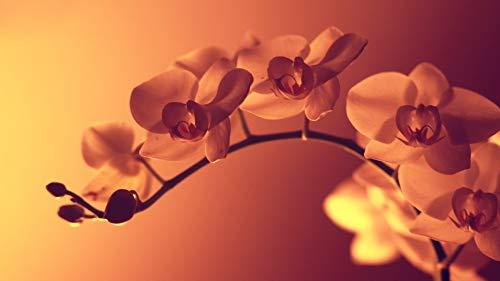 Puzzle 1000 Piezas Para Adultos De Madera Niño Rompecabezas-Flor En La Penumbra-Juego Casual De Arte Diy Juguetes Regalo Interesantes Amigo Familiar Adecuado
