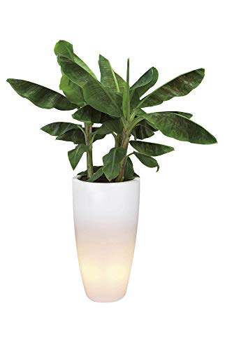 ELHO bloempot met LED-verlichting pure zacht, rond hoogte 40 cm, transparant