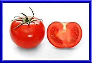 ANVIN Germination Seeds:Cannonball Tomato Seeds Makes Loads of Tomatoes