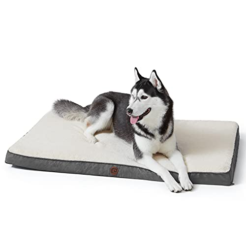 best chew proof dog bed