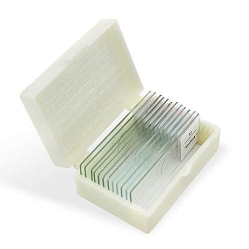 GEEFSU-Zwiebel Anther Meiose Mikroskop-Objektträger Biologische Forschung Erziehungswissenschaft (12 Stück)
