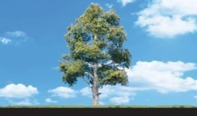 estar en gran demanda Classics Tree, Waters Edge 3-4 3-4 3-4 (3) by Woodland Scenics  hermoso