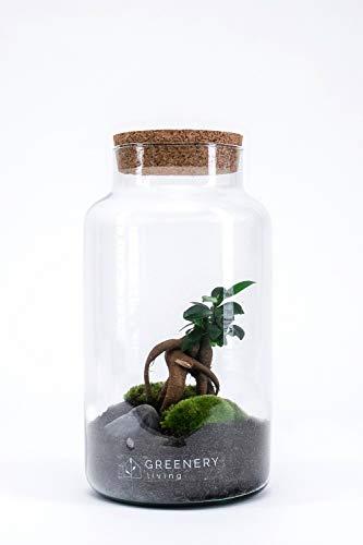 GreeneryLiving CORK-6 Premium DIY-Flaschengarten - Ökosystem im Glas - hochwertiges Pflanzenterrarium - Mini-Garten mit echten Pflanzen -...