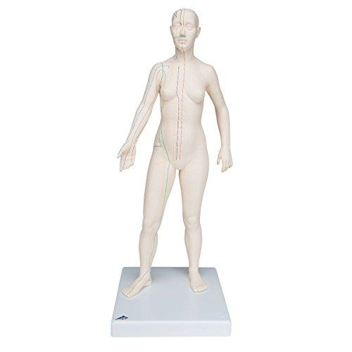 3B Scientific Akupunktur-Figur, weiblich