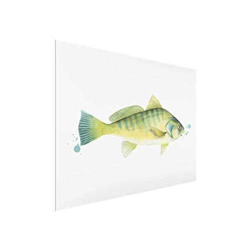 Bilderwelten Glasbild Moderne Kunst Fisch Flussbarsch Wandbild Glas Querformat, 60x80 cm