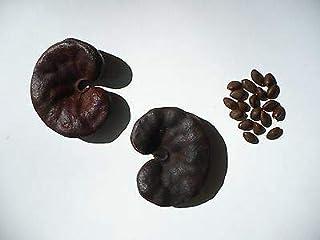 Earpod Tree Enterolobium Contortisiliquum Organic 10 Seeds