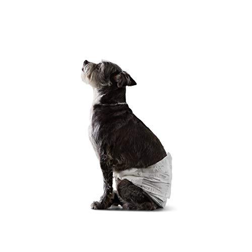 Amazon Basics - Pañal desechable para perro macho, S, paquete de 30 unidades