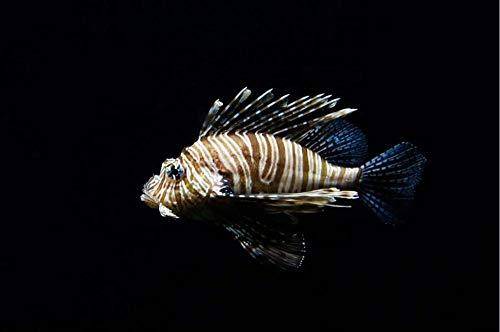 FFCLZ Feuerfisch, Aquarium, Unterwasser-Nahaufnahme-500psc, grünes Holzpuzzle/Erwachsenenpuzzle/Schwierigkeitsrätsel