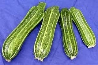 20 Certified Organic Costata Romanesco Zucchini Squash Seeds by Stonysoil Seed Company