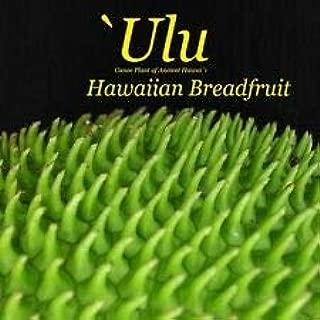 Cutdek ~ULU~ Breadfruit Artocarpus Ancient Hawaiian Canoe Plant 6-10+in sml potd Plant