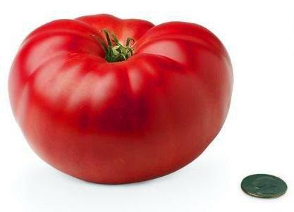 200 graines - GIANT MONSTER TOMATE Semer les graines Facile agriculture vegetales Semillas Tomate
