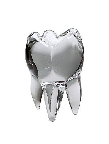 The Original Ranking TOP17 Wisdom Tooth Tampa Mall Glass Sculpture Solid Gl Clear - 5.5in