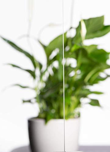elisando Glasplatte 43,5 x 24,5 cm Klarglas Einlegeboden Ersatzteil Glasplatte | Ersatz Abstellboden Einschub Boden in vielen Größen für viele Markengeräte | KlarGlas-Kühlschrank-43,5-24,5