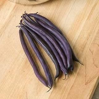 David's Garden Seeds Bean Bush Amethyst SL3011 (Purple) 100 Non-GMO, Open Pollinated Seeds