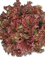 【レタス種子】サニーレタス レッドウェーブ (サカタのタネ) 小袋(3.5ml)